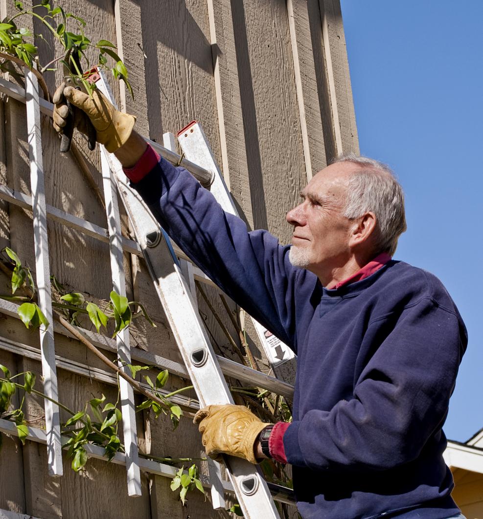 Senior man pruning a vine